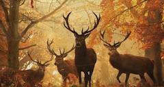 Animal Habitats Find Items