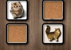 Cat Memory