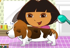 Dora Pet Grooming
