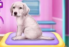 Labrador at Pet Salon