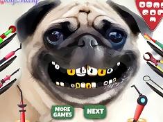 Pug Teeth Problems