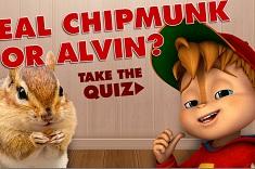Real Chipmunk or Alvin Quiz